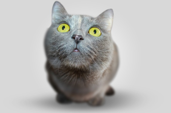 cat-animal-eyes-grey-54632
